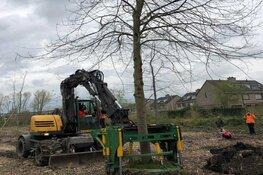 Wethouder van Garderen plant boom uit Almeers bomenregister in Landgoederenbuurt