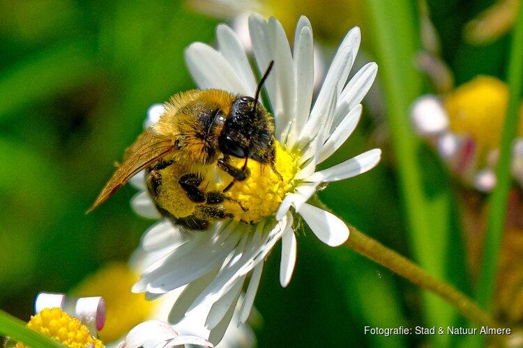 Het zoemt tijdens bijen -en insectendag stadslandgoed de Kemphaan