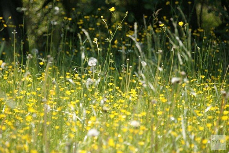 Hooikoortspatiënten opgelet: aankomende week extra pollen in de lucht door hitte