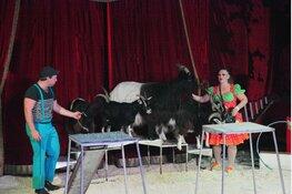 Nationaal Familie Circus Barani op Rio de Janeiroplein