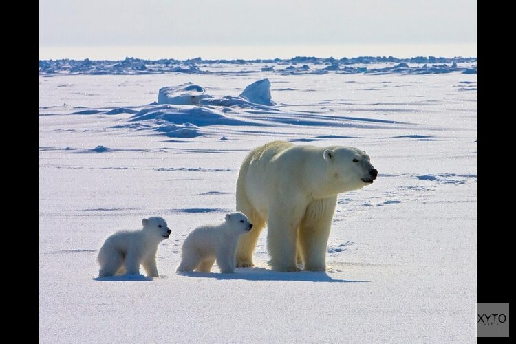 Canadese ijsberenbiologe Susan Crockford geeft lezing in Almere