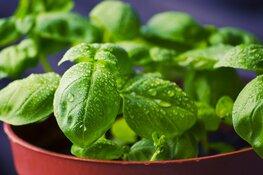 Kweek je eigen kruiden in je tuin, vensterbank of op je balkon