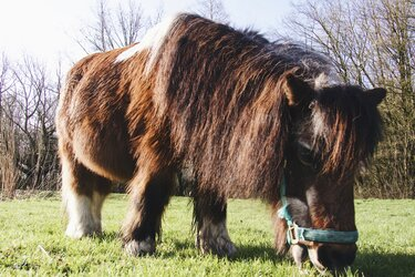 38-jarige Kobus is het leukste, oudste paard van Almere!