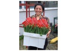 5000 tulpen van Ultimum als dank voor medewerkers Flevoziekenhuis