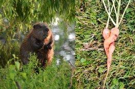 'Liefde' en 'Natuur in de wijk' winnen Floriade Fotowedstrijd