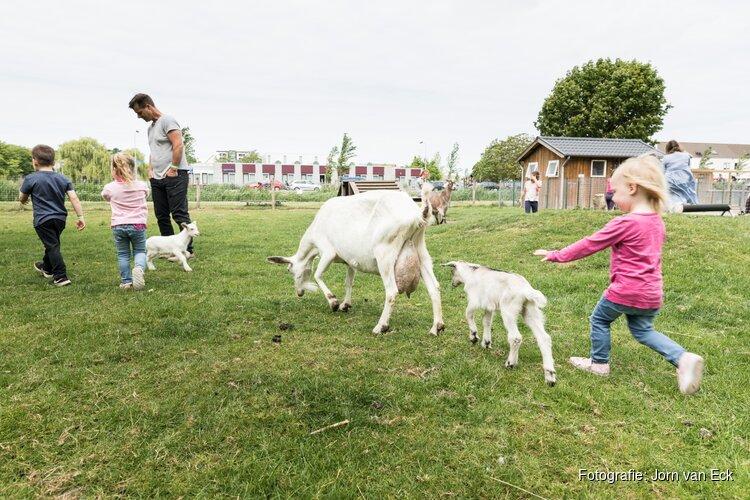 Knuffel de dieren op de kinderboerderij