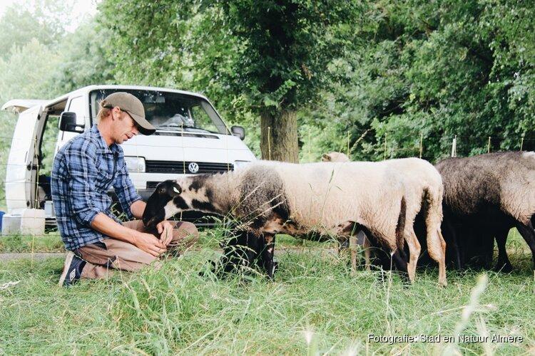 Schaapskudde Almere zoekt waterdragers