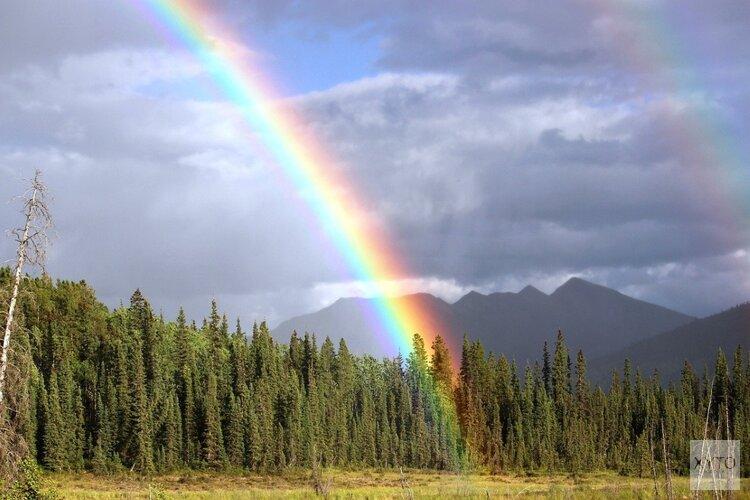 Gemeente hijst regenboogvlag en transgendervlag  Start van de regenboogmaand