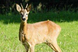 22 september gaat De Grote Vijf ree safari weer van start
