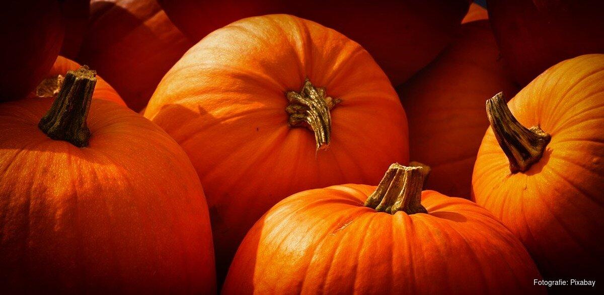 Geluiden Halloween.8x Spannende Activiteiten Met Halloween Almeredagblad Nl