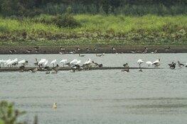"""Kees Moeliker over """"vreemde"""" vogels bij Natuurbelevingcentrum de Oostvaarders"""